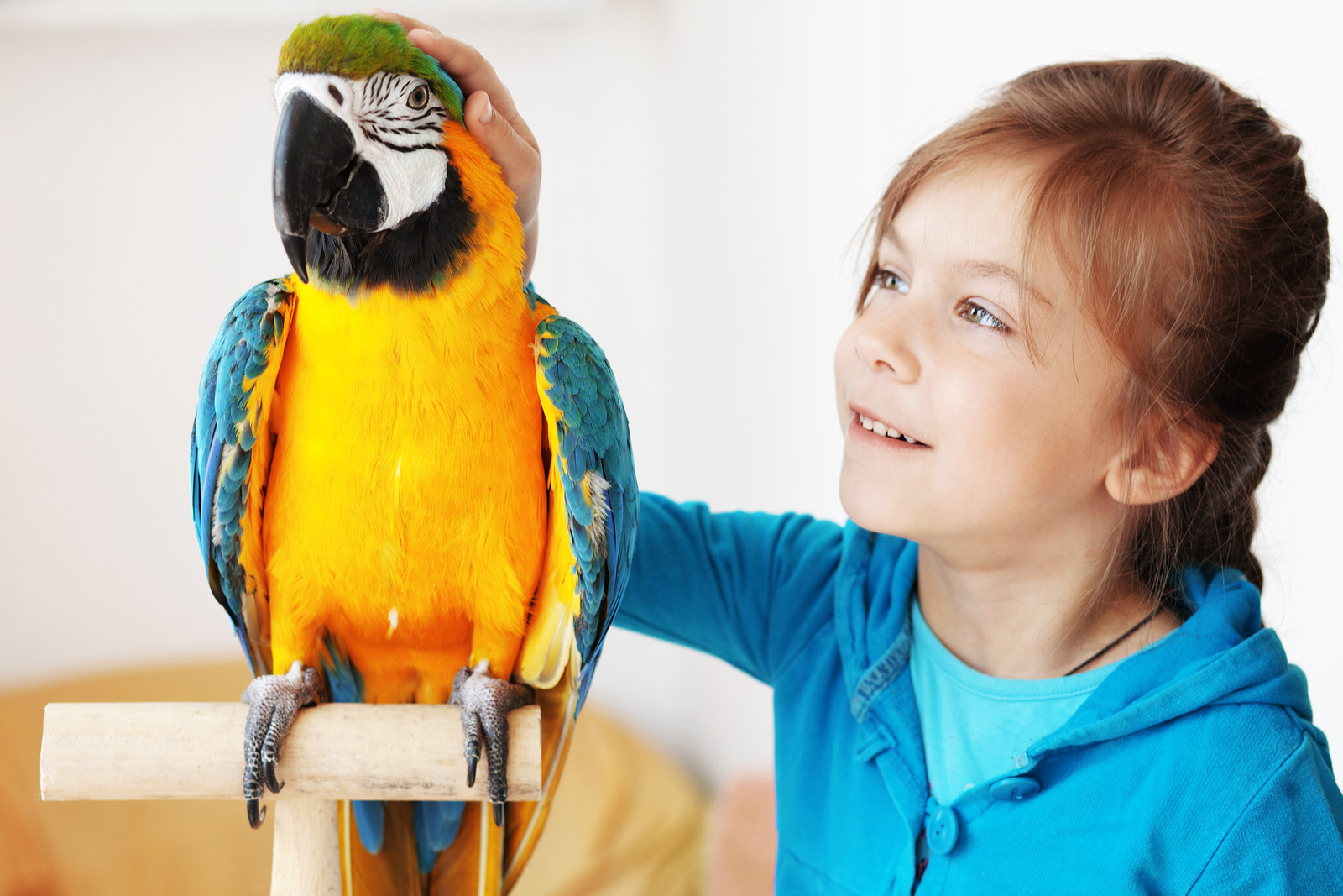 Kid With Exotic Parrot